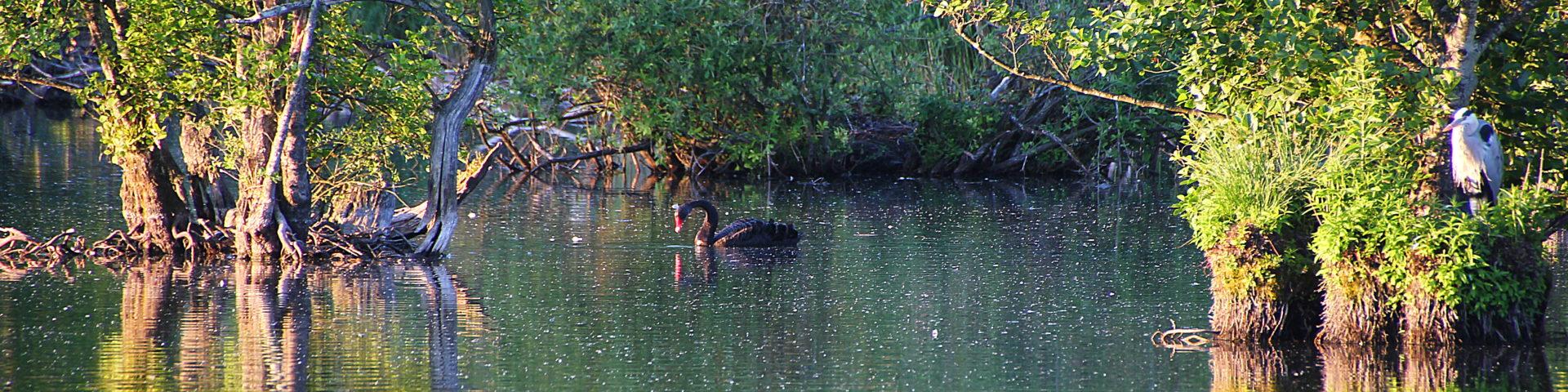 Vogelvielfalt am Wehradelta